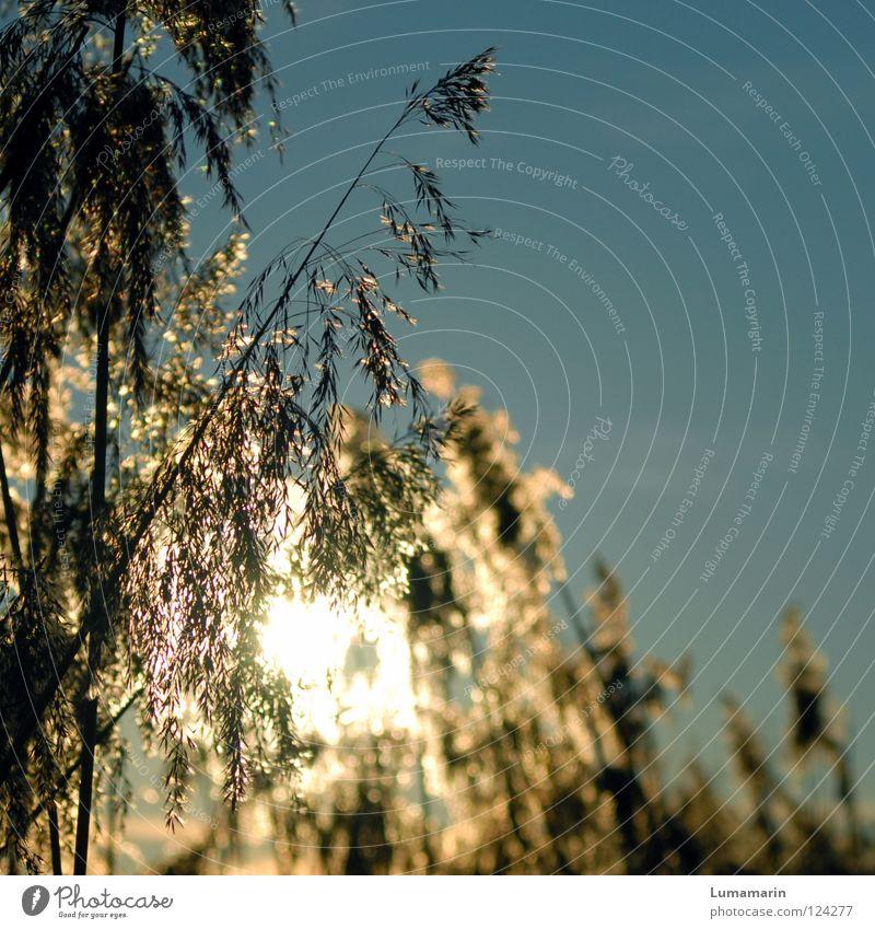 Abendwärme schön Himmel Sonne Pflanze Winter Lampe Gras Traurigkeit Wärme Beleuchtung Kraft glänzend Hoffnung Energiewirtschaft Fluss