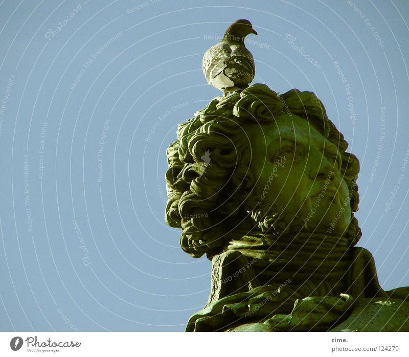 das hat er nun davon ... Gesicht maskulin Mann Erwachsene Kopf 1 Mensch Kunst Skulptur Statue Denkmal Straßburg Sehenswürdigkeit Locken Vogel Taube Stein sitzen