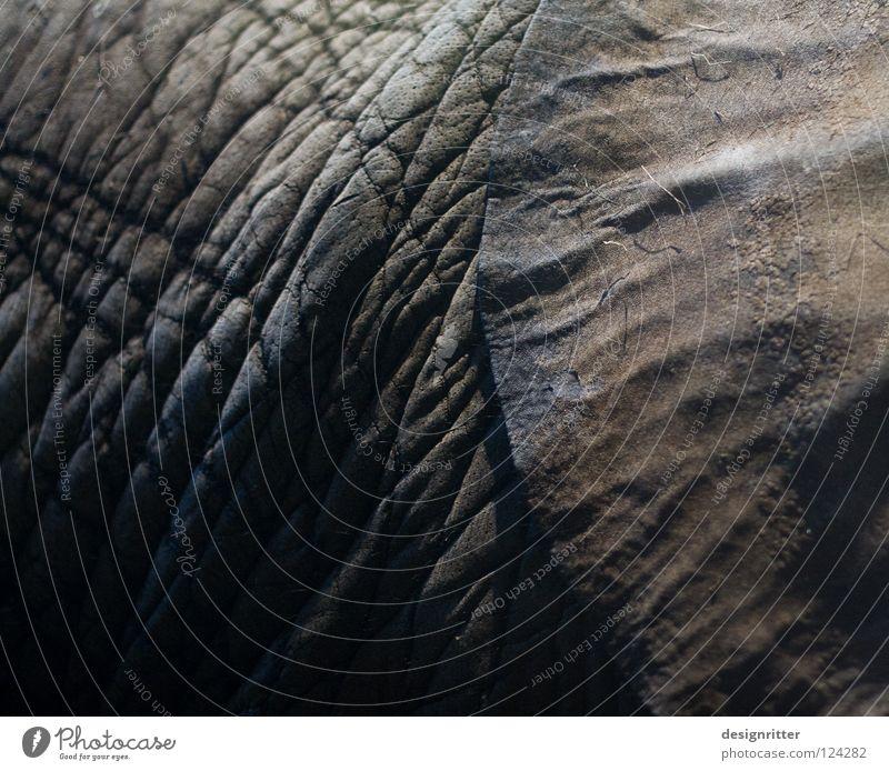 Horch ... Leder dunkel schwarz Tier Elefant hören Gehörsinn Elefantenohren verletzen Schutz Sicherheit ignorieren privat Privatsphäre Pore Gemälde Tasche