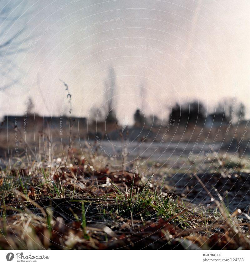 ein Morgen wie dieser Feld Gras Pflanze Sträucher unordentlich Halm Unschärfe Brandenburg Brachland analog Mittelformat negativ Ferne Horizont Beton Demontage