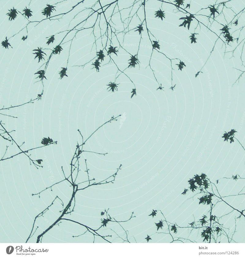 BITTI-ASTLIG Bettwäsche Nachproduktion Blüte Nebel Herbst Winter Zeit himmelblau Baum Konjunktur weiß zart Blühend Am Rand Bilderrahmen grau türkis hell-blau