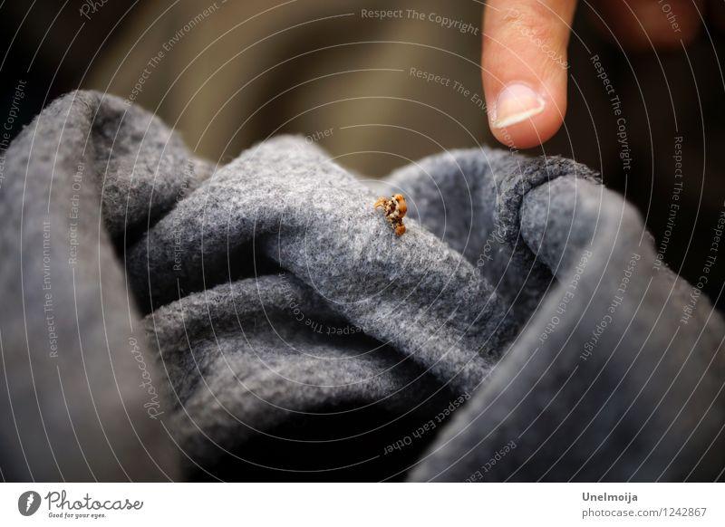kleine Raupe auf einem grauen Pullover Tier 1 außergewöhnlich groß Neugier Kraft Willensstärke Mut Tatkraft Tierliebe Ausdauer Entschlossenheit erleben
