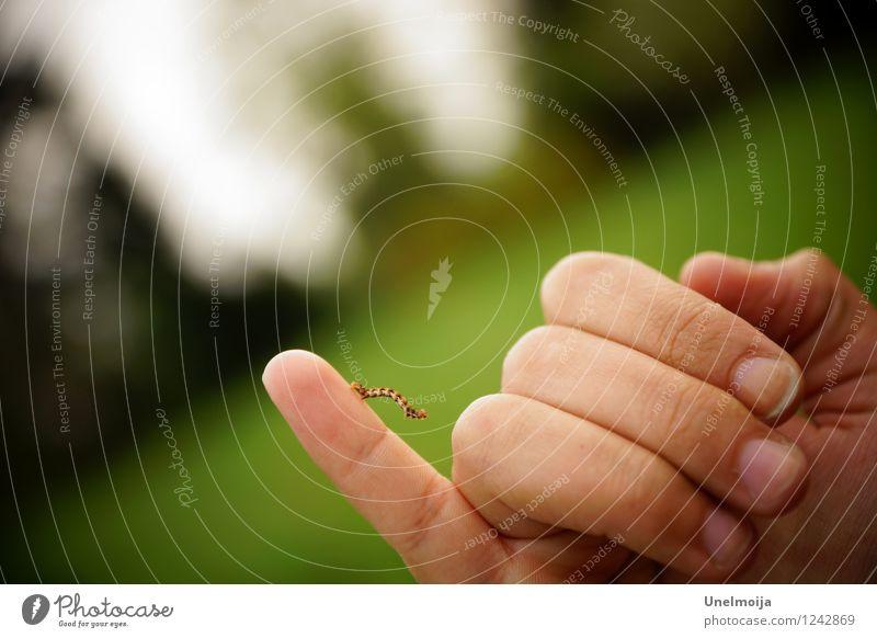 kleine Raupe auf kleinem Finger Tier 1 beobachten Bewegung krabbeln Erfolg grün selbstbewußt Kraft Willensstärke Mut Tatkraft diszipliniert Ausdauer Beginn