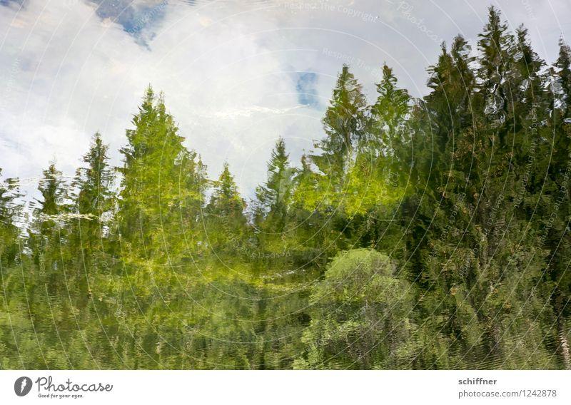 Feuchte Fata Morgana Umwelt Natur Wasser Pflanze Baum Wald Teich See grün Tanne Reflexion & Spiegelung Wolken Hintergrundbild falsch gemalt Luftspiegelung