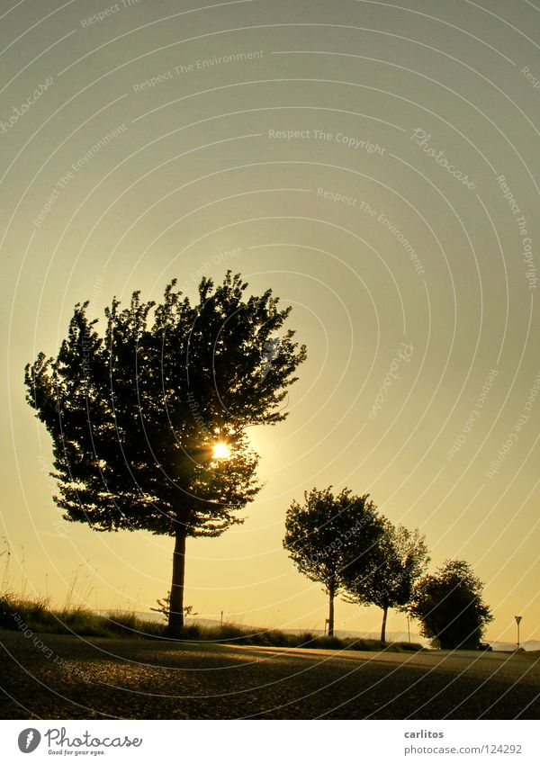Sturmfrisur Baum Sonne Straße Herbst Linie Raum Wetter Show Richtung Reihe mystisch blenden Promenade Täuschung Illusion Fahrbahn