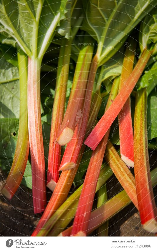 urban gardening rhabarber ernte Lebensmittel Gemüse Salat Salatbeilage Frucht Rhabarber Ernte selbstverpflegung selbstversorgung Bioprodukte