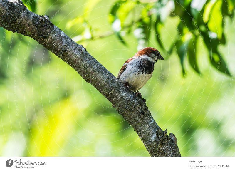 Spatzi Natur Pflanze Tier Wald Garten fliegen Vogel Park Flügel Tiergesicht Sperlingsvögel