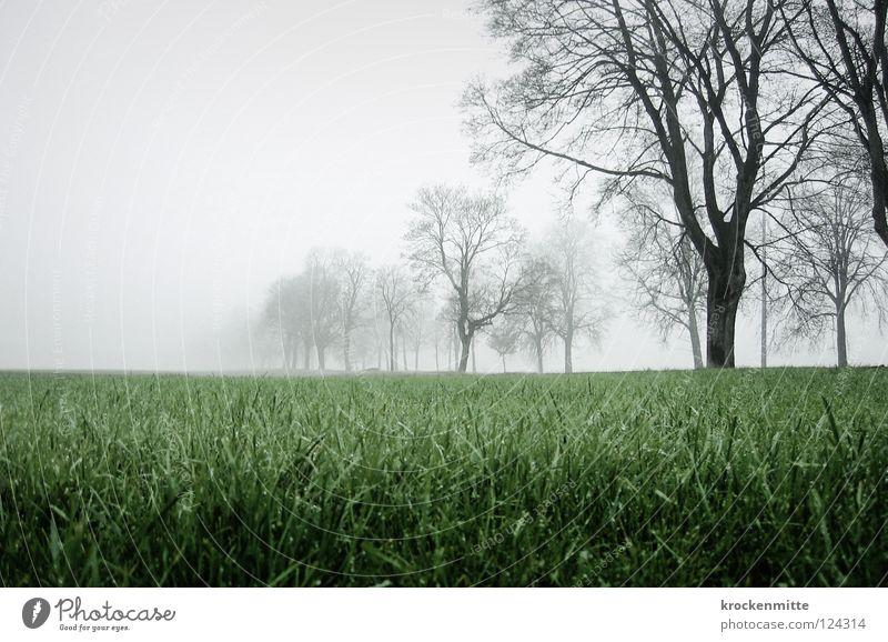 Seltsam, im Nebel zu wandern Baum grün Herbst Wiese Gras Landschaft Feld Nebel Spaziergang Schweiz Ast Rheintal