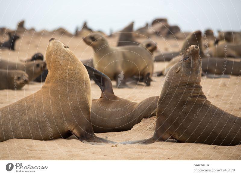 hochnäsig. Ferien & Urlaub & Reisen Tourismus Ausflug Sightseeing Safari Expedition Sommer Umwelt Natur Sand Himmel Strand Meer Namibia Afrika Tier Wildtier