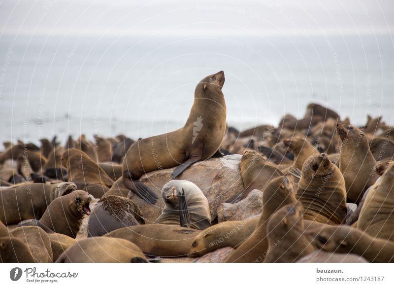 arrogant. Himmel Ferien & Urlaub & Reisen Sommer Meer Tier Strand Umwelt Küste oben Sand wild Wetter Tourismus Wellen Erde Wildtier