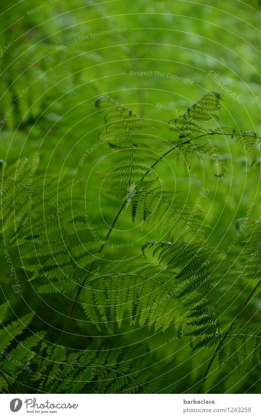 voll viel Farn Natur Landschaft Pflanze Sommer Sträucher Wachstum viele wild grün Lebensfreude Farbe Hoffnung Kraft Sinnesorgane Umwelt Farbfoto Außenaufnahme