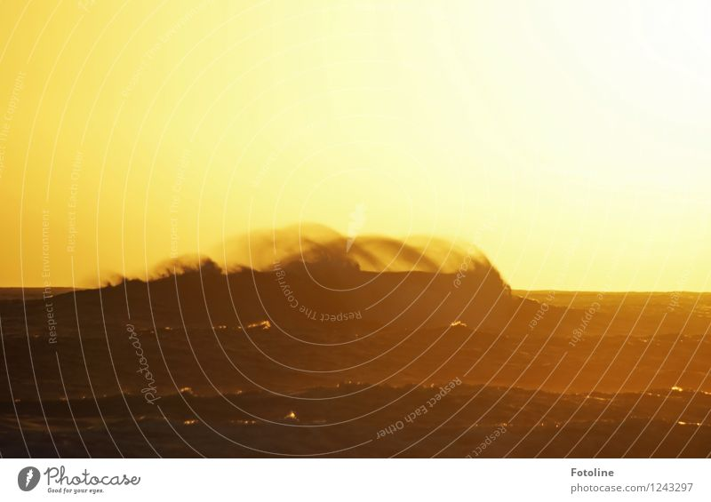 gewaltig Umwelt Natur Urelemente Wasser Himmel Wolkenloser Himmel Schönes Wetter Wellen Meer Unendlichkeit hell Wärme Wellengang Wellenkuppe Wellenkamm