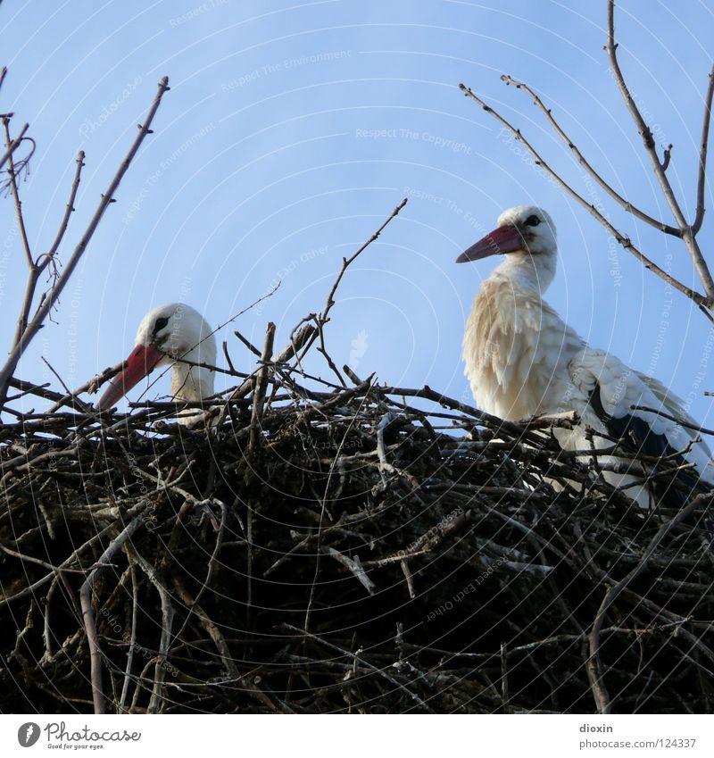 Babylieferservice, Mitarbeiterproduktion blau Liebe Wolken Vogel Tierpaar fliegen paarweise Sträucher Feder Flügel Ast Geborgenheit Schnabel Geburt Nest