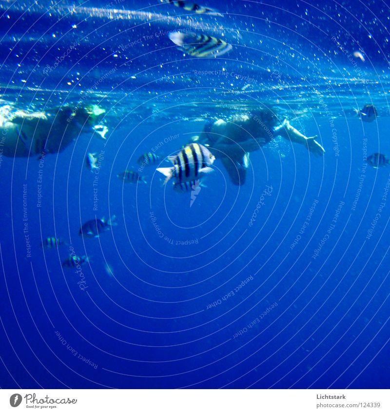 fang mich ein ... Wasser Meer grün blau Freude Ferien & Urlaub & Reisen ruhig Farbe Sport Spielen Kraft Wellen Fisch Energiewirtschaft Afrika