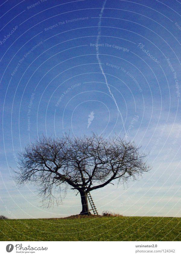 Der Baum 3 Ödland dunkel Feld grün Leiter alt altmodisch Flugzeug Kondensstreifen Himmel blau Wolken weiß Einsamkeit Ferne kalt Landschaftsformen Composing