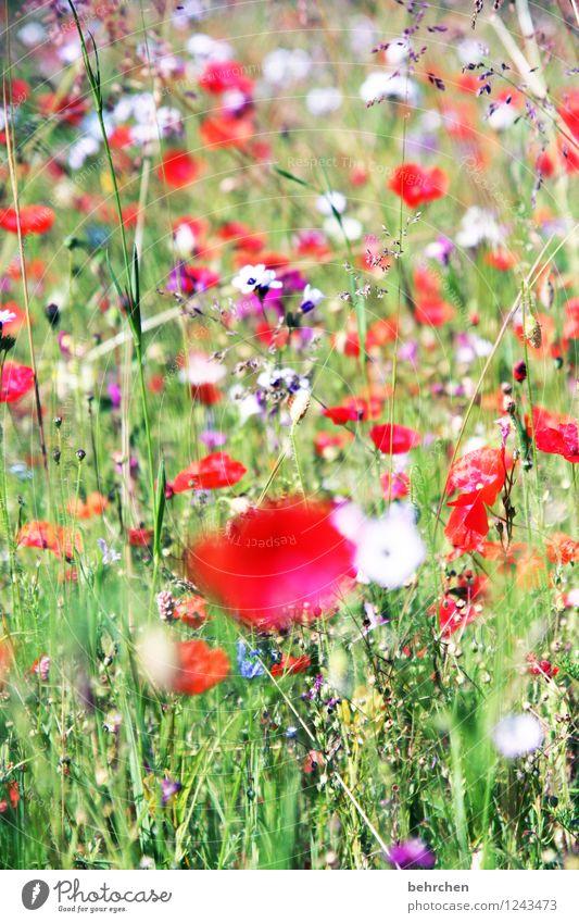 huch, fast vergessen: MO(H)NTAG Natur Pflanze grün schön Sommer Blume rot Blatt Blüte Frühling Wiese Gras Garten Park Wachstum frisch