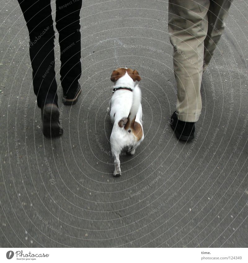 Sonntagnachmittagsspaziergang Frau Hund Mann Spielen Beine gehen laufen maskulin 3 Kommunizieren Spaziergang Asphalt Hose Schwanz auslaufen