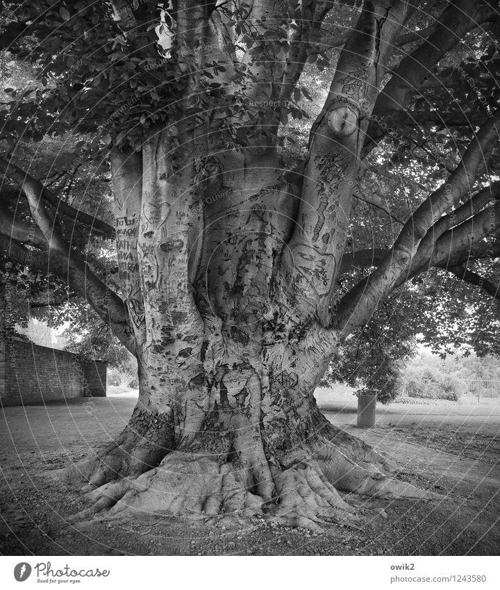 Facebook-Vorläufer Natur Pflanze Baum Blatt Umwelt Mauer Deutschland Park Schriftzeichen groß Herz Zeichen Kontakt Information fest Verliebtheit