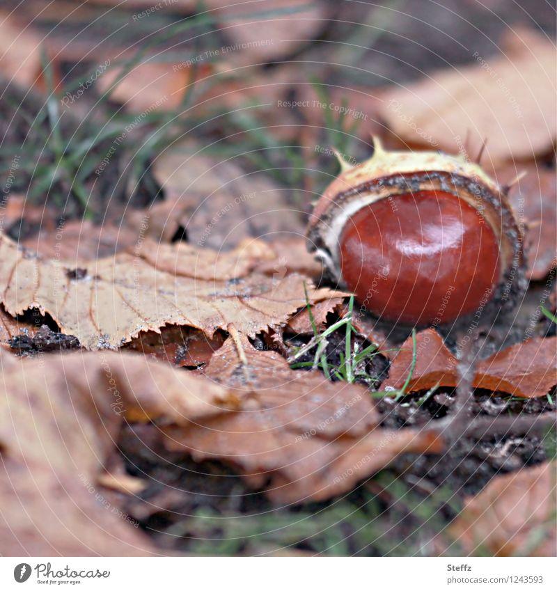 Saisonende II Natur Pflanze Herbst Blatt Wildpflanze Kastanie Herbstlaub Park braun Herbstgefühle Oktober herbstlich Herbstfärbung Farbfoto Außenaufnahme