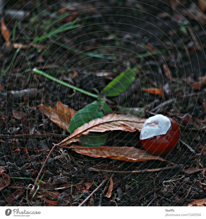Saisonende III Natur Pflanze Herbst Blatt Kastanienblatt Herbstlaub Park braun Herbstgefühle Vergänglichkeit Oktober herbstlich Herbstfärbung Herbstbeginn