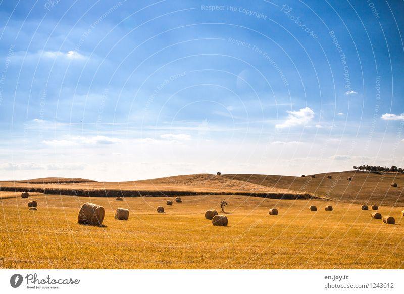 liegengelassen Himmel Natur Ferien & Urlaub & Reisen blau Sommer Landschaft Ferne Umwelt gelb Horizont Feld Wachstum Klima Italien Schönes Wetter Hügel
