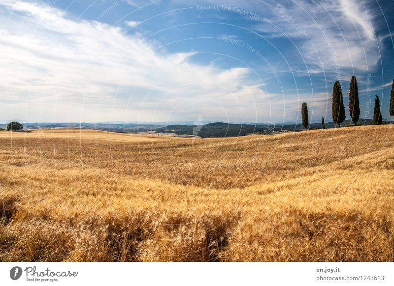 Wohlstand Himmel Natur Ferien & Urlaub & Reisen blau Sommer Landschaft Wolken Gesunde Ernährung Umwelt gelb Gesundheitswesen Horizont Feld Klima Schönes Wetter