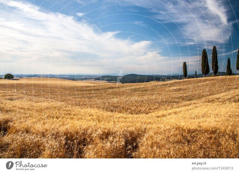 Wohlstand Himmel Natur Ferien & Urlaub & Reisen blau Sommer Landschaft Wolken Gesunde Ernährung Umwelt gelb Gesundheitswesen Horizont Feld Klima Schönes Wetter Italien