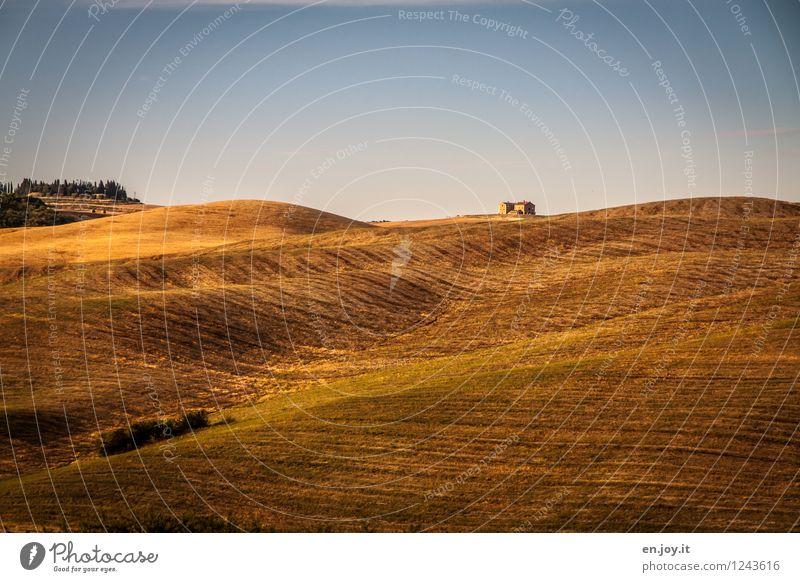 allein Himmel Ferien & Urlaub & Reisen blau Sommer Einsamkeit Landschaft ruhig orange Zufriedenheit Feld Wachstum Klima Lebensfreude Italien Hügel Landwirtschaft