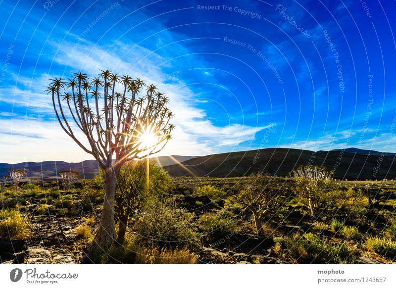 ...baum (*50) Ferien & Urlaub & Reisen Tourismus Ausflug Abenteuer Ferne Safari Expedition Umwelt Natur Landschaft Pflanze Himmel Wolken Klima Klimawandel