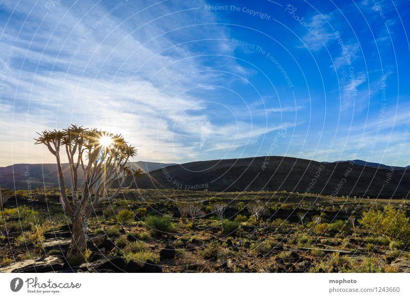 Köcher... Ferien & Urlaub & Reisen Tourismus Ausflug Abenteuer Ferne Safari Expedition Umwelt Natur Landschaft Pflanze Himmel Wolken Sonne Sonnenaufgang
