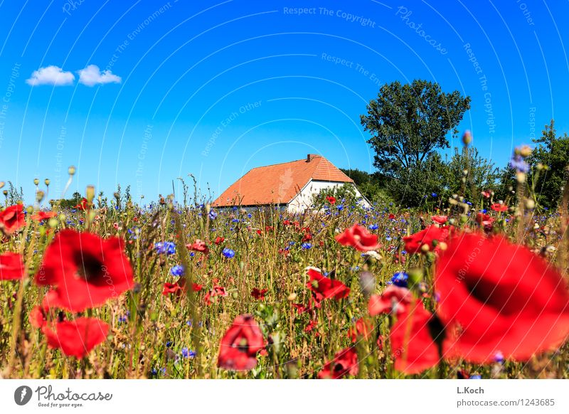 Landleben Himmel Ferien & Urlaub & Reisen Pflanze Sommer Baum Blume Landschaft Wolken Haus Gras natürlich Gebäude Garten Wohnung Feld Häusliches Leben