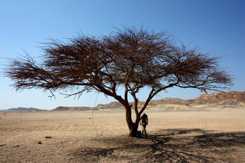 trockener Baum in der Wüste Himmel Natur Pflanze Sommer Sonne Landschaft Umwelt Holz Stein Sand Schönes Wetter Abenteuer ausdruckslos
