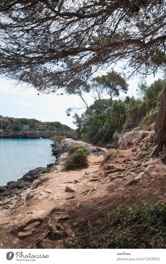 Cala Sa Nau Natur Ferien & Urlaub & Reisen Baum Erholung ruhig Strand Wege & Pfade Schwimmen & Baden Felsen Bucht Im Wasser treiben mediterran Mallorca Pinie