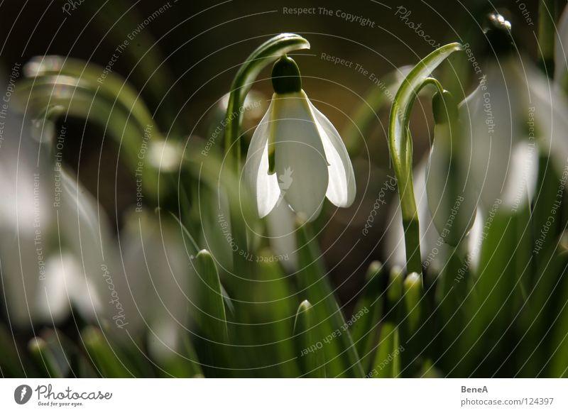 Blümschns 3 Natur weiß grün schön Pflanze Sommer Blume Winter schwarz Leben dunkel Schnee Wiese Blüte Frühling hell