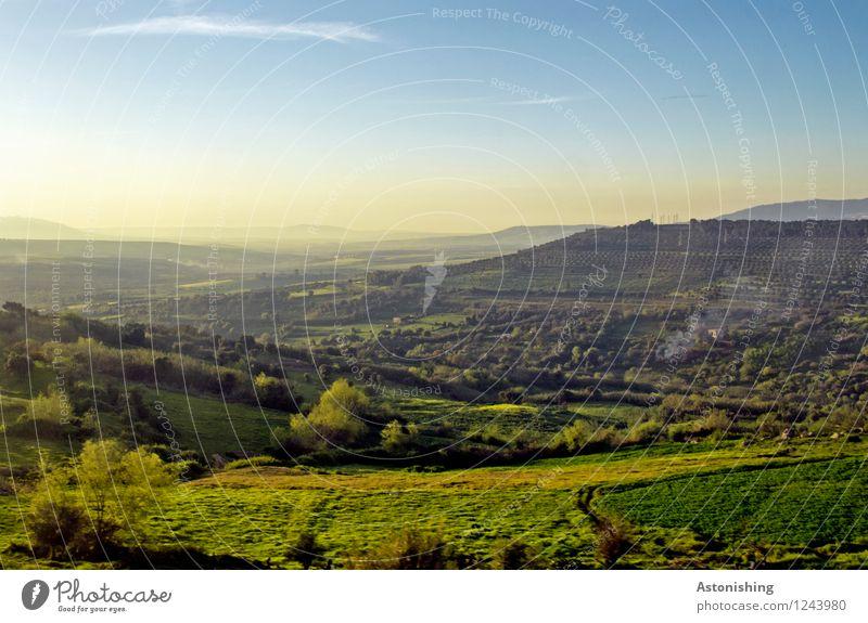 grünes Marokko Umwelt Natur Landschaft Pflanze Luft Himmel Wolken Horizont Sonnenaufgang Sonnenuntergang Sommer Wetter Schönes Wetter Baum Gras Sträucher Wiese