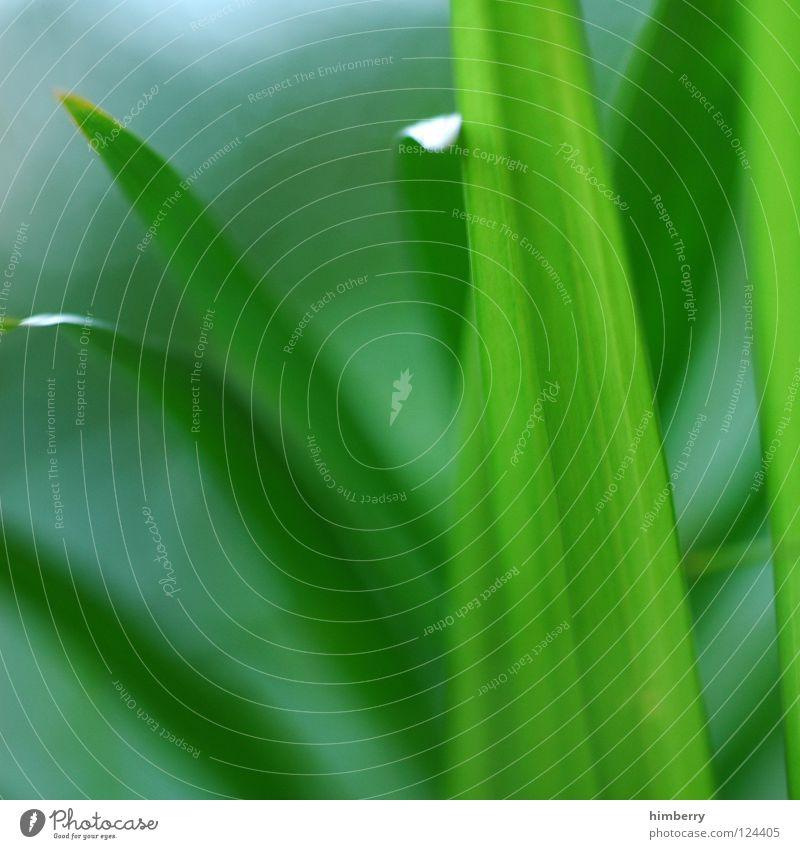 greenlines Natur Ferien & Urlaub & Reisen grün Strand Park Hintergrundbild frisch Urwald Palme Botanik Echte Farne Grünpflanze Florida Bahamas