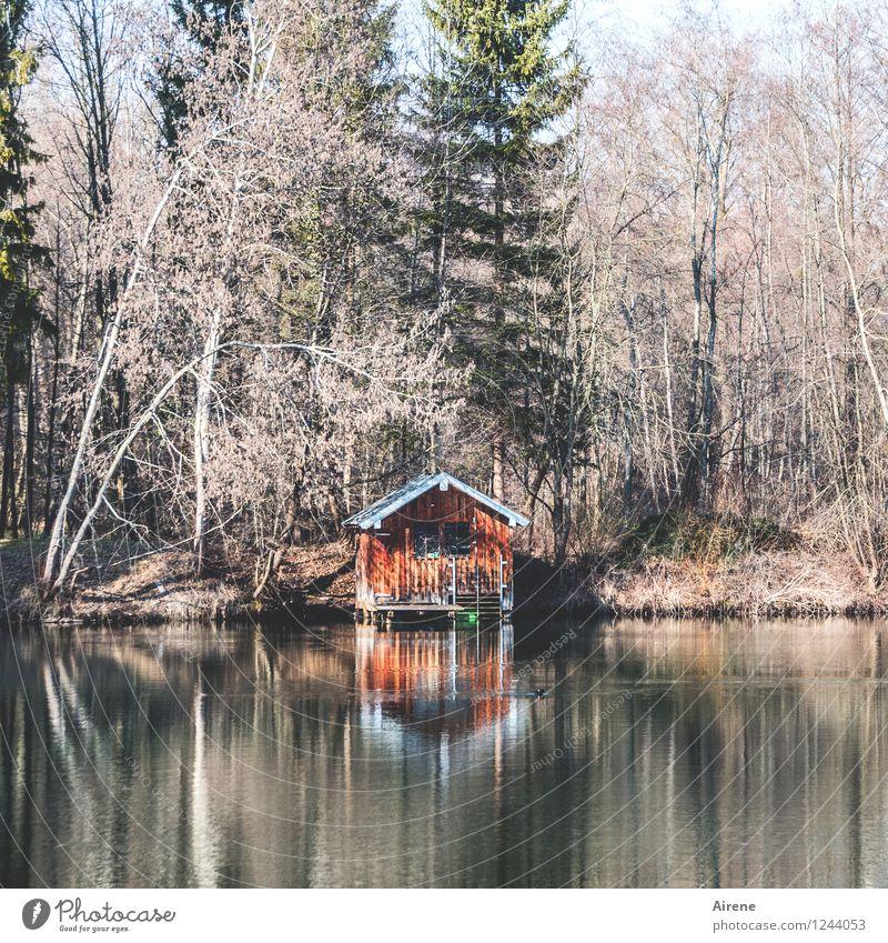wenn einem mal wieder alles zu viel wird... Wald Seeufer Teich Hütte Scheune Bootshaus alt positiv braun orange rot trösten Erholung ruhig Einsamkeit Farbfoto