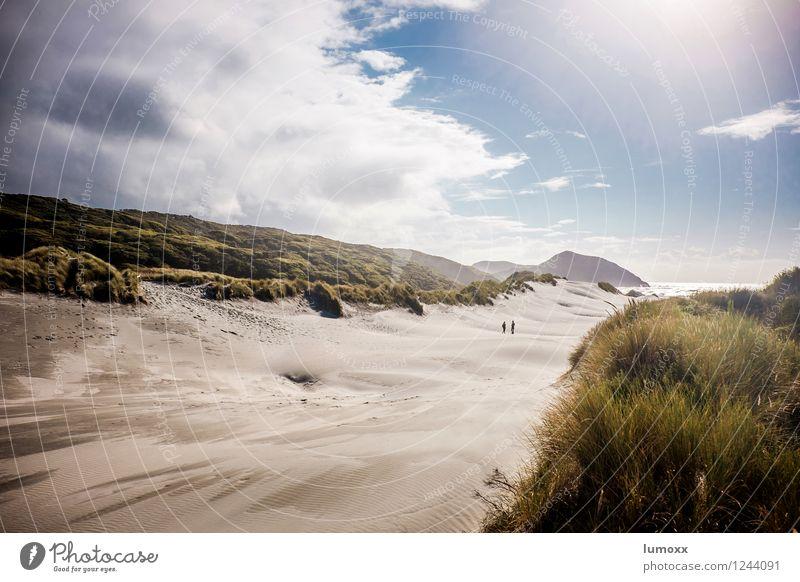 dunewalker Natur Landschaft Sand Himmel Wolken Gewitterwolken Sommer Gras Küste Strand Meer Pazifik Insel Neuseeland Südinsel stehen blau gold grün