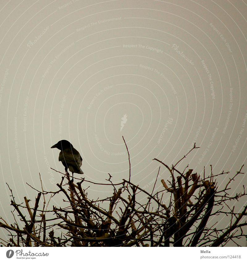Krähenwinter IV Winter Einsamkeit kalt Garten grau Park Vogel sitzen Sträucher beobachten Ast Zweig trüb Geäst hocken Rabenvögel
