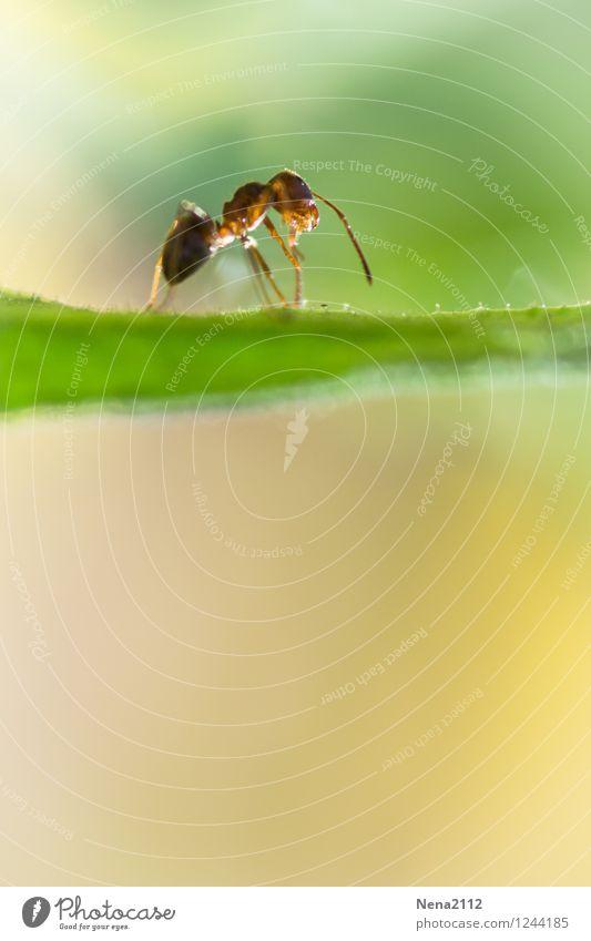 Überblick Umwelt Natur Tier Luft Frühling Sommer Schönes Wetter Pflanze Gras Sträucher Blatt Garten Park Wiese Wald 1 elegant hoch sportlich grün Ameise Insekt