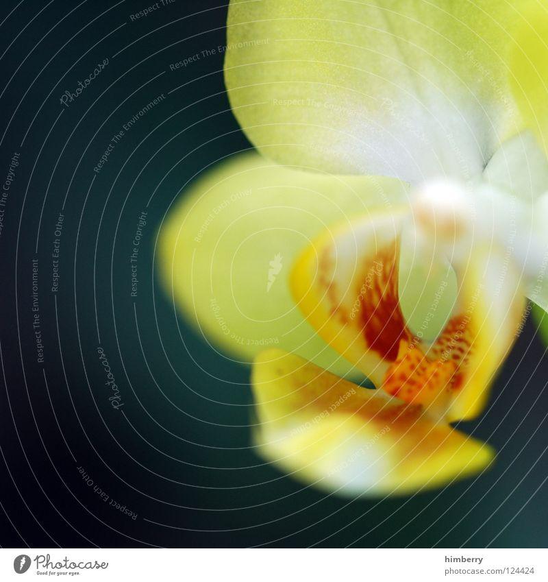 flower sauer Blume Blüte weiß Blütenblatt Botanik Sommer Frühling frisch Wachstum Pflanze rot Hintergrundbild Park Makroaufnahme Detailaufnahme Blütenknospen