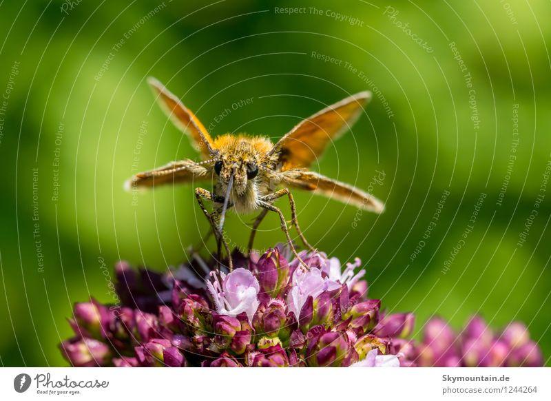 Attacke Umwelt Natur Pflanze Tier Frühling Sommer Herbst Klima Klimawandel Wetter Schönes Wetter schlechtes Wetter Blume Wildpflanze Garten Park Wiese Feld Wald