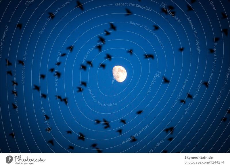 Mond Umwelt Natur Tier Himmel Wolkenloser Himmel Nachthimmel Frühling Sommer Herbst Wetter Schönes Wetter Garten Park Wiese Feld Wald Hügel Wildtier Vogel