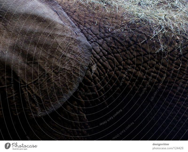 Grasnarbe Leder dunkel schwarz Tier Elefant hören Gehörsinn Elefantenohren verletzen Schutz Sicherheit ignorieren privat Privatsphäre Pore Gemälde Tasche