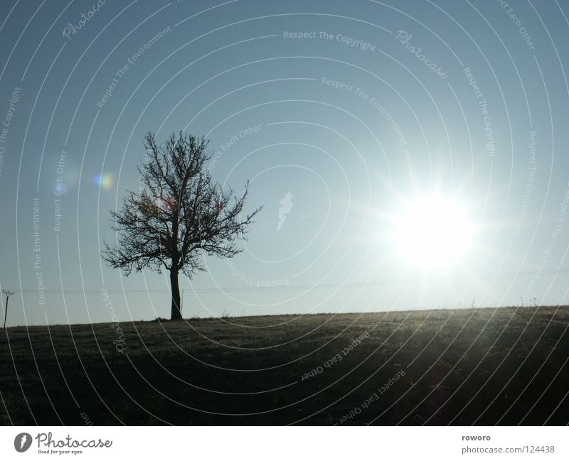 Wintersonne Baum Herbst Einsamkeit Gegenlicht Feld Wiese Jahreszeiten Sonne Landschaft Desloch Blauer Himmel Schönes Wetter Natur