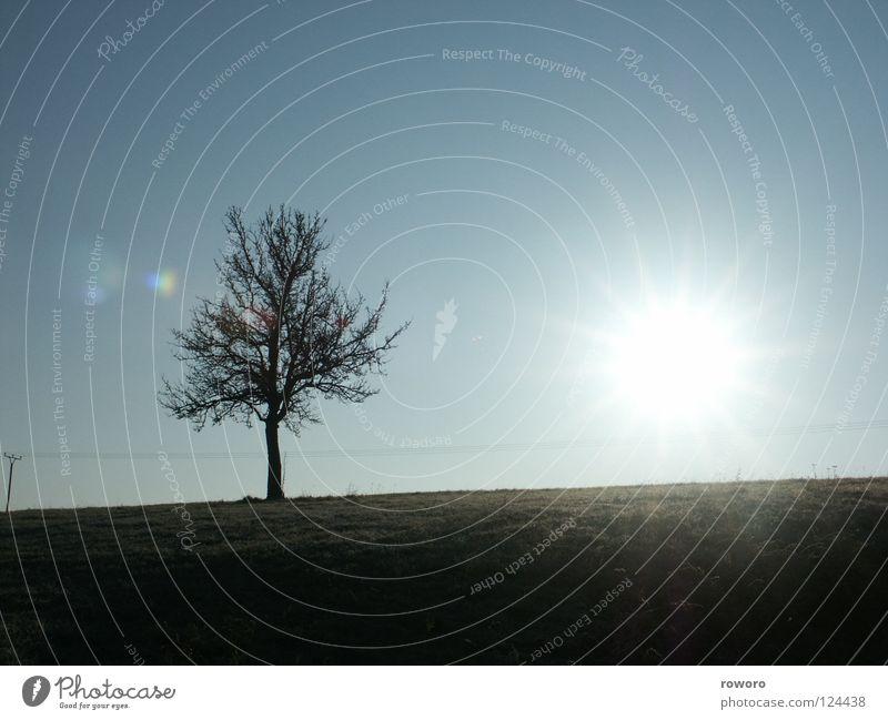 Wintersonne Natur Baum Sonne Winter Einsamkeit Herbst Wiese Landschaft Feld Jahreszeiten Jahr Schönes Wetter Blauer Himmel