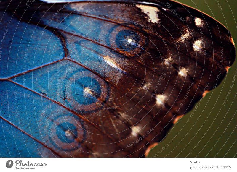 style your wings XIII Natur Schmetterling Flügel Augenfalter Edelfalter Morphofalter blauer Morphofalter nah natürlich schön braun achtsam Inspiration Kreis