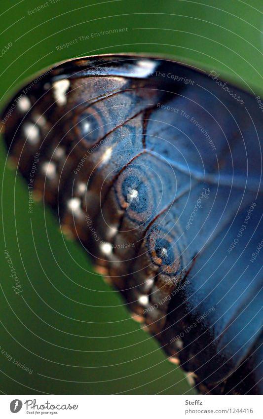 style your wings XIV Natur Schmetterling Flügel Morphofalter Edelfalter Augenfalter blauer Morphofalter nah natürlich schön braun grün Inspiration Leichtigkeit