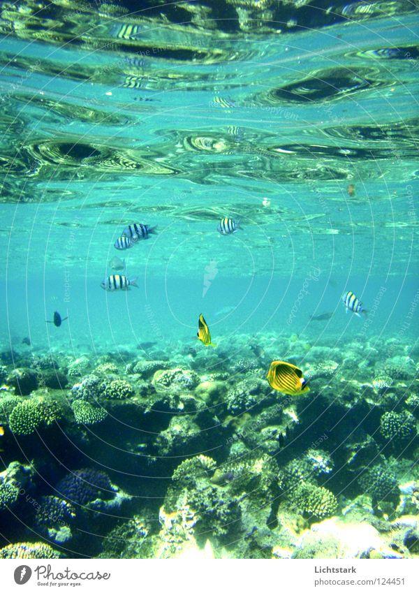 bleib doch da blau Wasser grün Ferien & Urlaub & Reisen Meer Farbe ruhig Freiheit Bewegung Wellen Schwimmen & Baden Kraft Freizeit & Hobby Energiewirtschaft