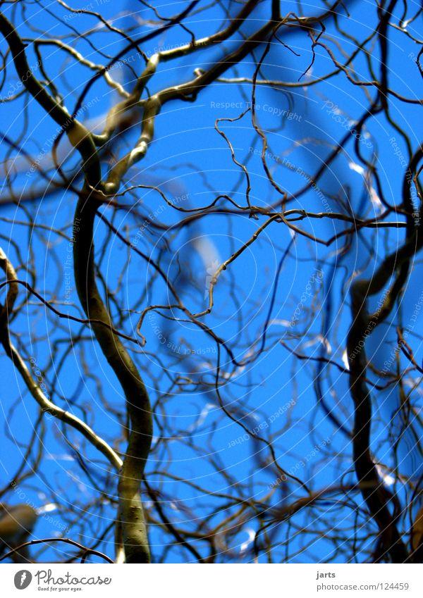 verzweigt Himmel Baum blau Park Ordnung Ast Weide unordentlich